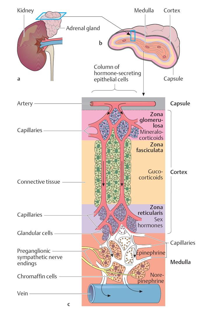 Ткань Хромаффинная