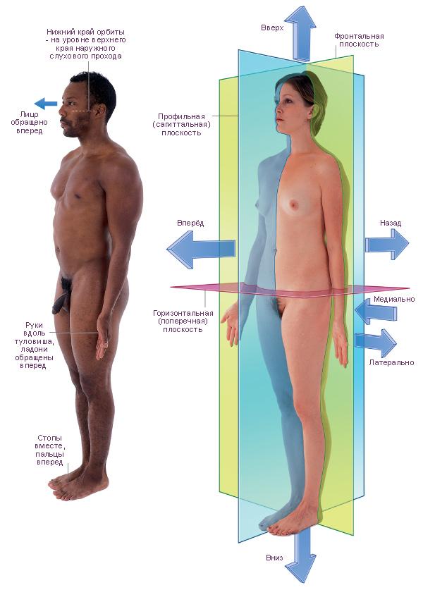 исходное положение тела,