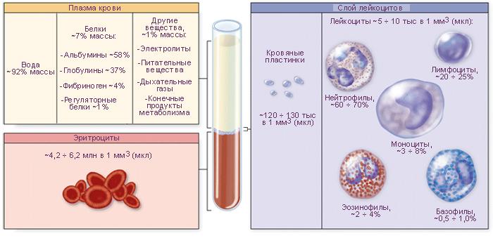 Схема. Состав крови.