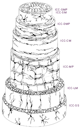 Схема желудочно-кишечного