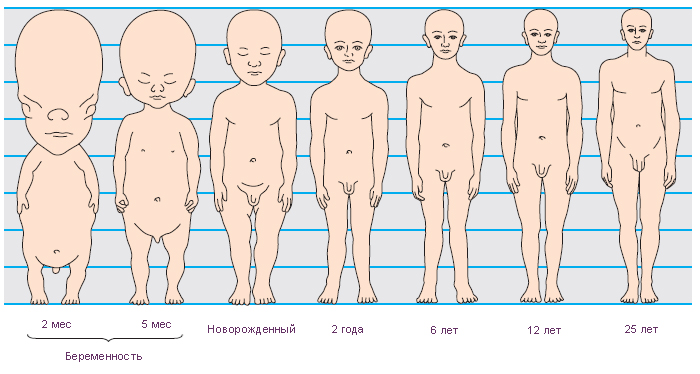 Eds. The Human Body.
