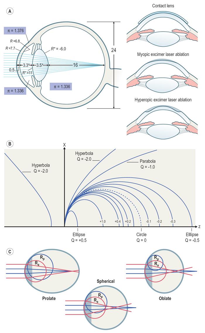 схема глазного яблока с внешними мышцами