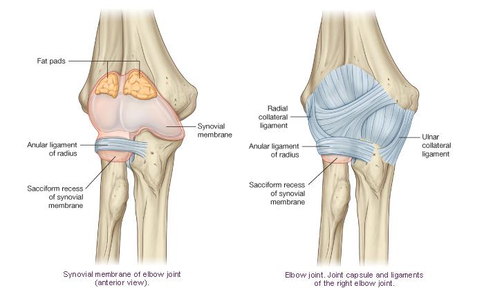 Перевод на английский суставной биодобавки визион устраняют жидкость в коленом суставе