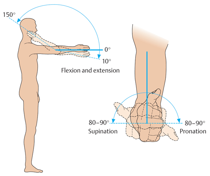 Фаланговый сустав антропология суставно-связочный массаж