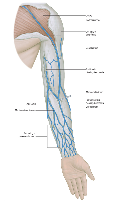 Операция лазером варикоз на ногах