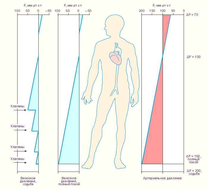 Изолированная систолическая гипертония лекарства