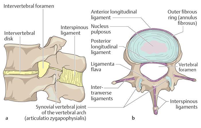 Мембрана синовиальная