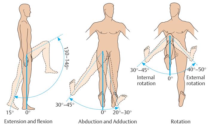 Вращение коленного сустава строение коленного сустава связки коленного сустава