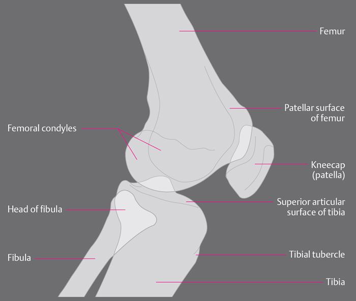 Фаланговый сустав антропология суставы болят симптомы и лечение