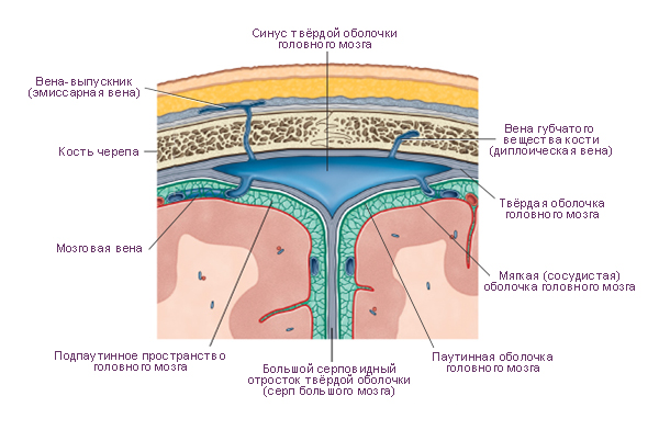 Анатомия человека: Литература.