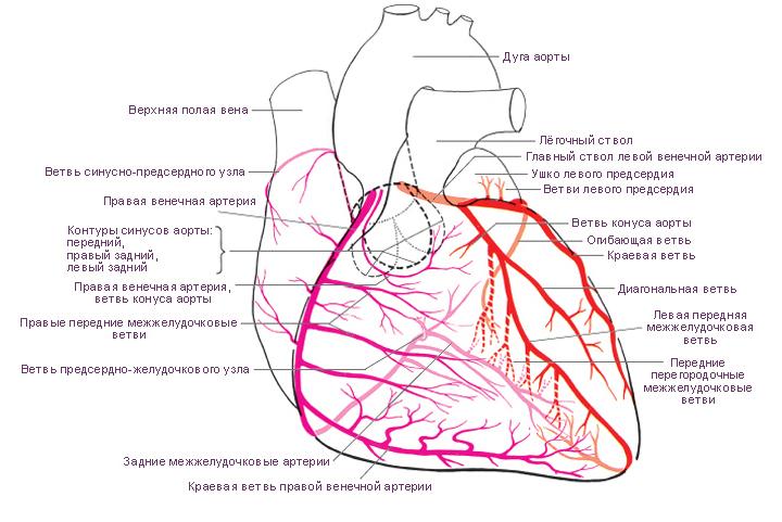 Вязание крючком схема сердце