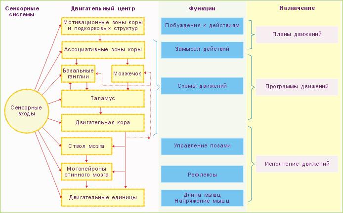 Модификация схемы из: Human