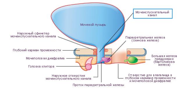 Как лечить кисту бартолиновой железы народными