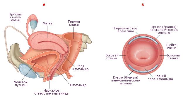 гинекологический осмотр фото