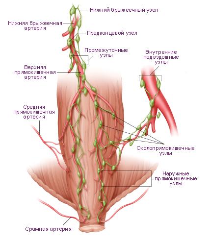 Схема. Лимфатические узлы