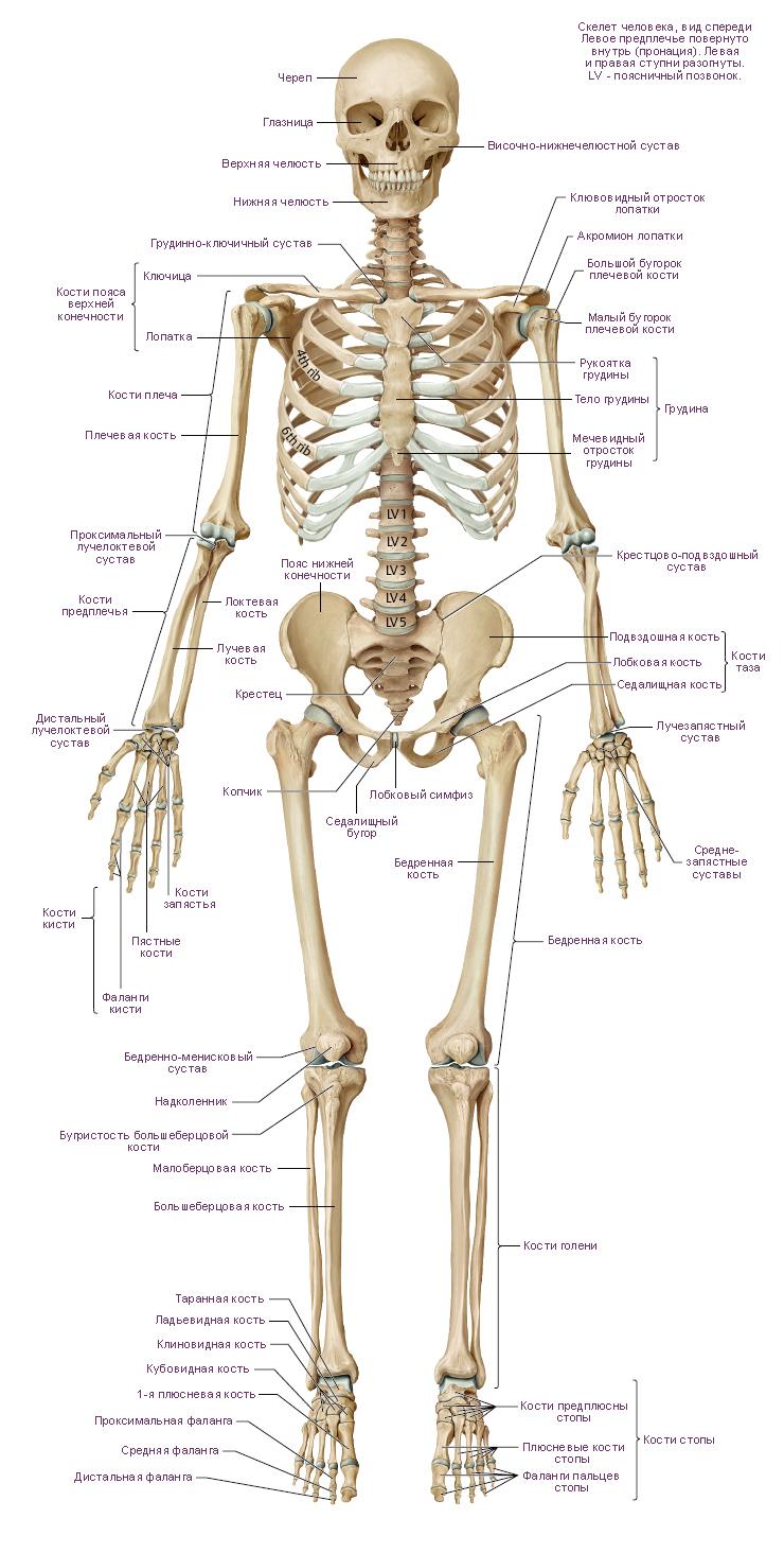 Трифонов е в пневмапсихосоматология