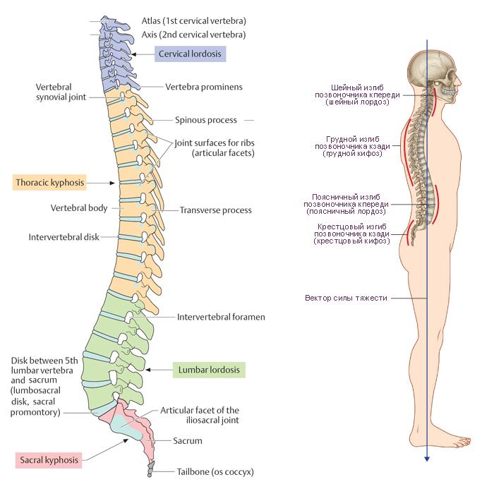 Схема. Движения тела в