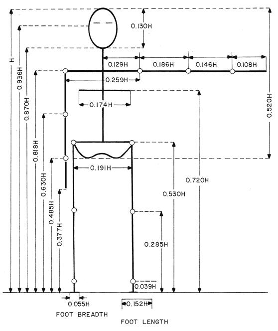 длина частей тела (H