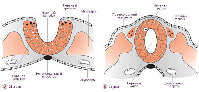 Ответы Биологии 6 Класс