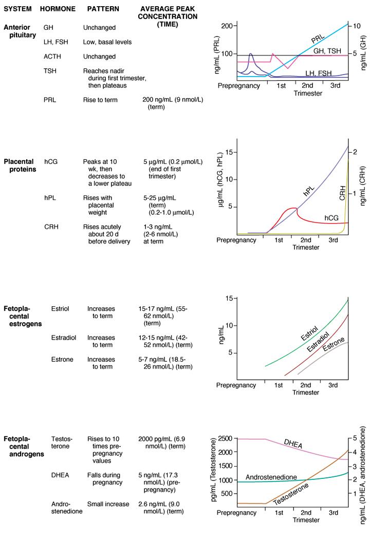 Сыворотка Глютаминовой Пировиноградной Трансаминазы