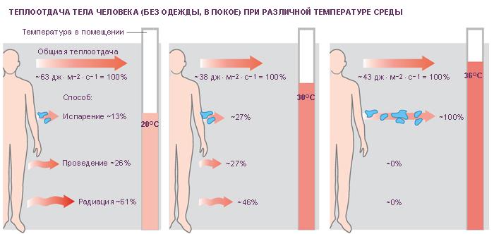 Схема. Теплоотдача тела