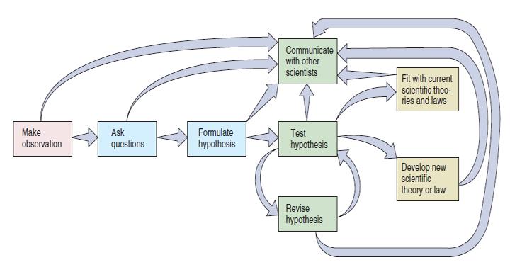 Схема.  Этапы научного исследования.  Модификация: Enger-Ross: Concepts in Biology, 10th ed., McGraw-Hill, 2002, 530...